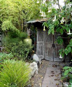 danger garden: The garden of Marcia Donahue