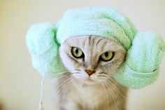 "Our feline friends know the importance of a warm, fluffy towel. Cats are also the epitome of a ""Don't Panic"" mentality. Funny Cats, Funny Animals, Cute Animals, Baby Cats, Cats And Kittens, I Love Cats, Cool Cats, Kawaii, Cat Hat"