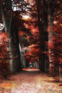 My love for autumn - Alkmaar - The Netherlands by Maarten Kuiper on 500px