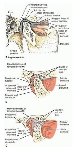 Anatomy of Temporomandibular Joint.....with TMJ Anatomy Video. | Lecture Notes In Dentistry