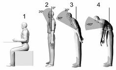 Curator at Work: Rapid Upper Limb Assessment (RULA) ergonomics and occupational risk prevention