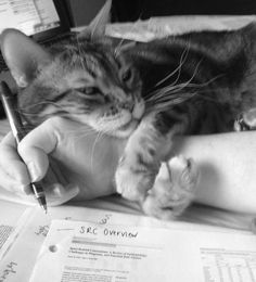15 Pets That Wouldn't Let Us Do Our Homework - World's largest collection of cat memes and other animals Cute Kittens, Cats And Kittens, Cats Bus, Kitty Cats, Funny Cats, Funny Animals, Cute Animals, Wild Animals, Funniest Animals