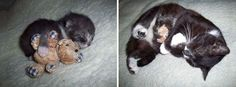 15+ Before-And-After Photos Of Cats Growing Up ~ Things You Need To Learn