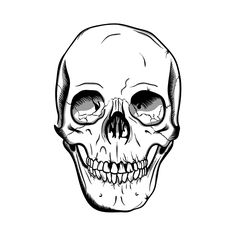 Skull illustration made using Wacom+illustrator