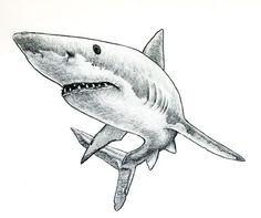 http://tattoo-pro.ru/upload//images/Fish/261173947_0f080e3c61.jpg