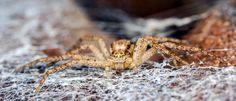 #macro #spider #nicography