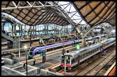 archibald le koala gare au train