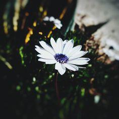 Pequeños detalles . . #vsco #vscogood #vscocam #snapseed #snapshot #snap #eyeem #igers #instamoment #hallazgosemanal #city #travel #walk #photography  #instagram  #ig_argentina #moodygrams #moodyxfujifilmx #artofvisuals #bevisuallyinspired #mg5k #argentina  #nature #colour #flowers