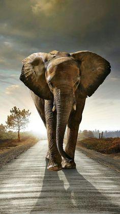 STUNNING BEAUTIFUL ELEPHANT!