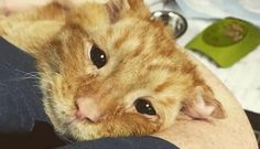 This stray cat was found in rough shape, but one vet technician refused to give up on him.