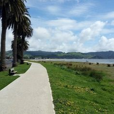 Just out for a stroll along the #whitianga  waterfront