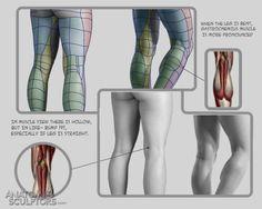 "Anatomy Drawing Reference fucktonofanatomyreferences: "" A spectacular fuck-ton of human leg references. [From various sources. Leg Anatomy, Anatomy Poses, Muscle Anatomy, Anatomy Study, Anatomy Art, Anatomy Drawing, Human Anatomy, Gross Anatomy, Leg Reference"