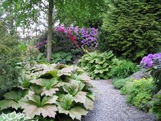 shady woodland garden with azaleas. Wish I could turn my backyard into this.