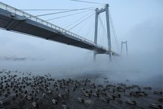 Krasnoyarsk, Russia A view of Vinogradovsky Bridge, a cable-stayed footbridge over the Yenisei River, linking the Strelka District and Tatyshev Island Picture Editor, S Pic, The Guardian, Cool Photos, Russia, Bridge, Cable, Around The Worlds, Nature