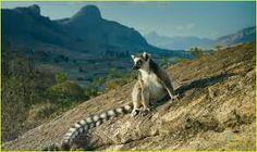 Image result for madagascar island