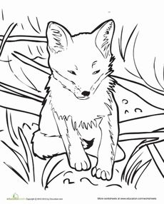 baby fox coloring page - Baby Forest Animals Coloring Pages