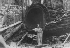 The Famous One Log House is one on Northern California attractions. It was hollowed out in 1946 from a single log that came from a 2100 year old redwood tree. The log weighed 42 tons and it took two men 8 months of hard work to hollow out a room 7 feet high (2 m) and 32 feet long (10 m).  Even though a house is just a tourist attraction, it is perfectly habitable and contains a kitchen, bedroom, living room, and dining room.