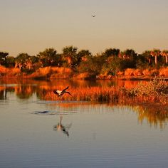 Florida Marsh and Wetlands Beautifully captured Helen H #Floridawetlands #marsh #wetlands #Floridadecor via @hhphotography3