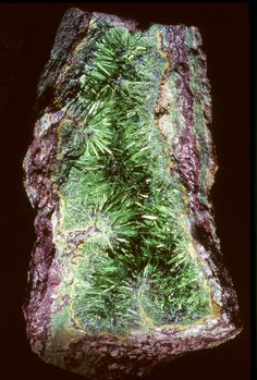 Cuprosklodowskite / Congo  -  Cuprosklodowskite is a secondary uranium mineral formed by alteration of earlier uranium minerals. Cuprosklodowskite is a nesosilicate mineral, It is grass green to dark green in color, and its crystal habit is typically acicular, flat bladed crystals. It is a strongly radioactive mineral.