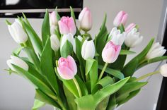 Pink and White Tulips White Tulips, Pink Tulips, Tulips Flowers, All Flowers, My Flower, Beautiful Flowers, Pink White, Pastel Flowers, Beautiful Things