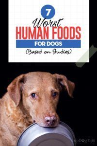The 7 Worst Human Fo The 7 Worst Human Foods Dogs Can T Eat Why