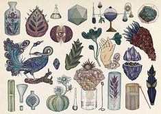 Artwork by katie scott botanical drawings, botanical illustration, botanica Botanical Drawings, Botanical Illustration, Botanical Prints, Illustration Art, Illustration Inspiration, Scientific Drawing, Graphic, Art Inspo, Illustrators