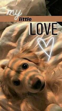 my birthday story ideas Ideas De Instagram Story, Creative Instagram Photo Ideas, Instagram Photo Editing, Foto Instagram, Instagram And Snapchat, Insta Photo Ideas, Friends Instagram, Shotting Photo, Dog Stories