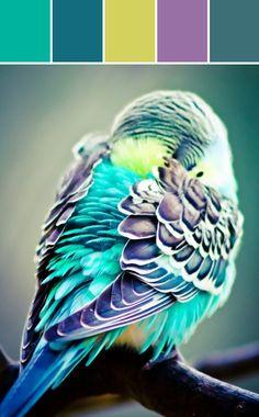 Parakeet Color Designed By Lisa Perrone | Stylyze Creative Director via Stylyze