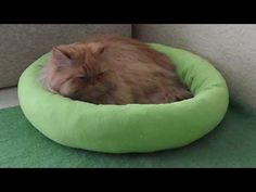 How to Make a Pet Bed - YouTube