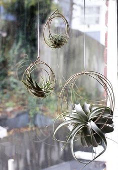 https://www.etsy.com/listing/255678880/small-tillandsia-ornaments-air-plant?ga_order=most_relevant