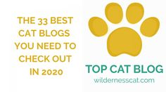 Big Cats, Cool Cats, Information About Cats, Cat Water Fountain, Jackson Galaxy, Cat Nutrition, Types Of Cats, Cat Behavior, All About Cats