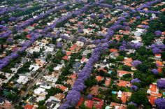We provide ultra-high resolution aerial photography. Photography Backdrop Stand, Aerial Photography, Landscape Photography, Johannesburg City, Jacaranda Trees, Pretoria, South Africa, City Photo, Backdrops