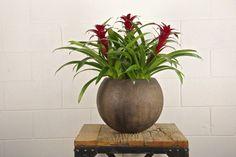 Your Online Indoor Plants Nursery And Pots