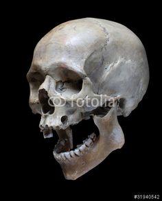 skull reference google search skulls pinterest google