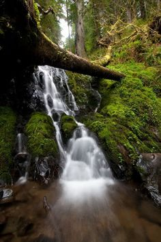 Fern Creek Falls. Coastal Redwood National Park Northern California Photo by Ryan Wright..... Relax with these backyard landscaping ideas and landscape design. #Relax more with this #music remixed with #BinauralBeats that can #heal you. #landscaping #LandscapingIdeas #landscapeDesign