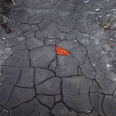 Andy Goldsworthy: Red Leaves on Cracked Earth, 2006. Galerie Lelong, Paris. Photo: Fabrice Gibert.