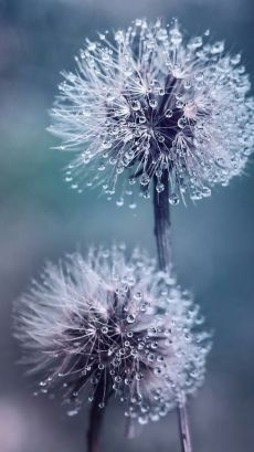 iphone wallpaper photography me in Th… - Blumen Dandelion Wallpaper, Sunflower Wallpaper, Flower Phone Wallpaper, Cute Wallpaper Backgrounds, Flower Backgrounds, Aesthetic Iphone Wallpaper, Aesthetic Wallpapers, Wallpaper Art, Travel Wallpaper