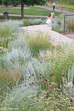 Bouteloua gracilis 'Blonde Ambition' (Blue grama) with another fantastic grass/perennial and seedheads.