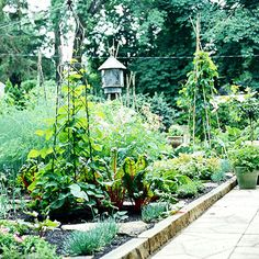 tips for growing an organic veg garden