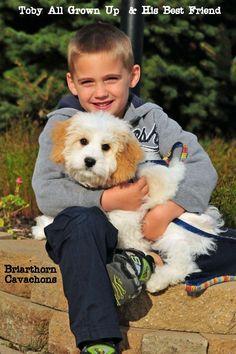 Cavachons | Briarthorn Cavachon Puppies | Cavachon Breeders - Briarthorndesignerpuppies -- very good reviews