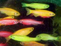 Los peces se disfrazan para pasar desapercibidos