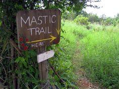 Mastic Trail - Grand Cayman, Cayman Islands KY