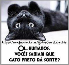 ANIMAIS AME-OS E OS DEIXE VIVER: frase gato preto