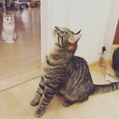 There is something in the air. Part III  #luckythecat #charliethecat #love #cute #catsofsalzburg #unterfoehring #germany #cat #cutecatcrew #ilovemypet #catlovers #lovekittens #instapet #catsagram #kitten #kitty #catstagram #kittycat #catsofinstagram #ilovemycat #catlove #catoftheday #furry #cats_of_instagram #cats #catlife #katze #katzenliebe ##meow #thiscat