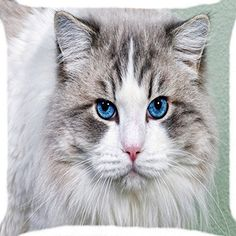 Cushion cover throw pillow case 18 inch grey white cat bl... https://www.amazon.com/dp/B00YBG2066/ref=cm_sw_r_pi_dp_x_c0J4ybAX2YZPN