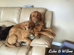 Echo and Ellie...roxy girl and abby girl