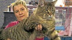 Youpet racconterà SuperCat Show 2013, la superfesta dei gatti