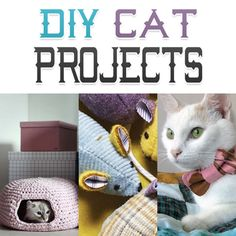 Looking for something to make your kitty cat that will make him or her purr with happiness? Try one of these DIY Cat Projects. They are kitty cat Pawfect!!