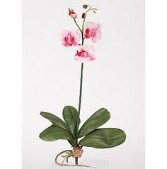 Mini Phalaenopsis Silk Orchid Flower w/Leaves 6 Stems
