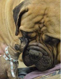 No hay nada más hermoso que una mamá con su cachorro